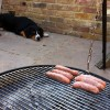 Alfie Entlebucher watching the sausages being BBQ'd