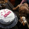Archie Dog Birthday cake