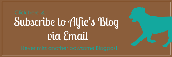 click to subscribe to alfies blog via email