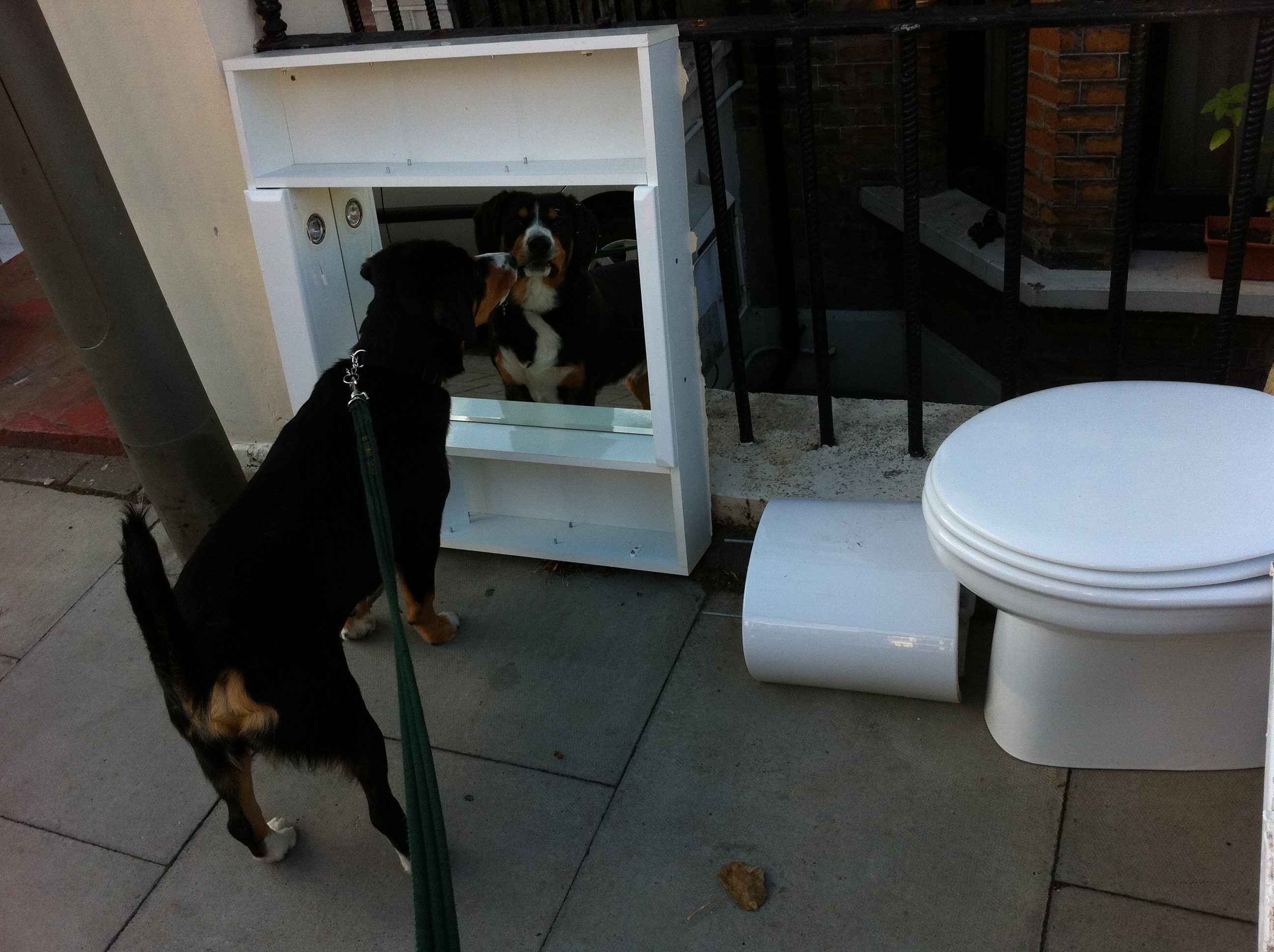 Alfie-Entlebucher-dog-mirror-bathroom