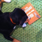 alfie-entlebucher-dog-reading-the-dastardly-book-for-dogs