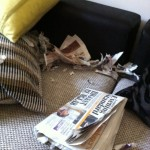 dog-chewed-newspaper