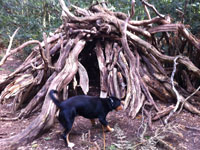 Puppy Alfie exploring wooden hut
