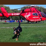 London-air-ambulance-helicopter-alfie-dog-park