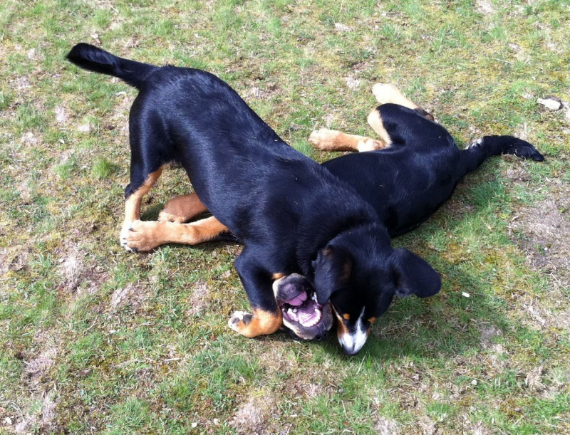 When I met Beano in the park we wrestled for hours! (I'm the one on top, he is the one with the big teeth!)