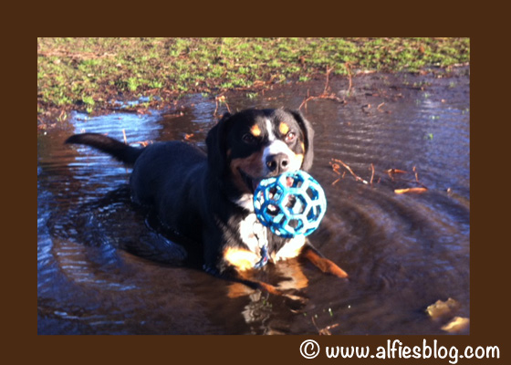 Aliffe-in-them-mud-dog