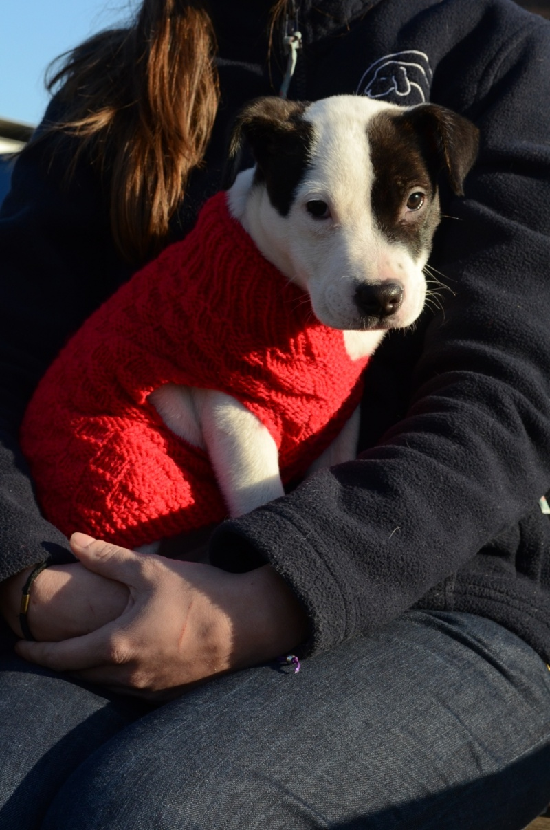 Help Battersea\'s Dogs Stay Warm this Winter - Knit a Dog Jumper or ...