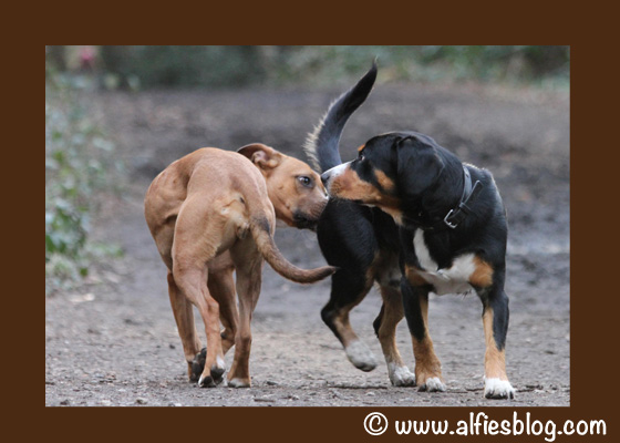 dogs-saying-hello-snifing-butts