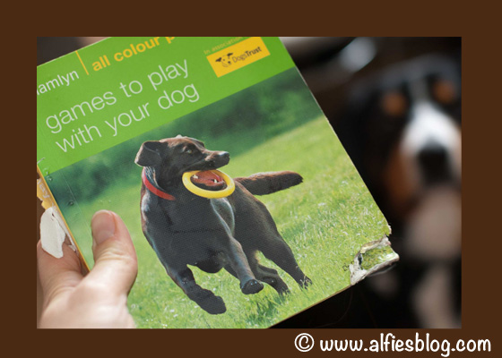 Games To Play with Your Dog - An Excellent Read!