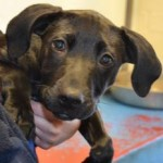 Woof! I'm Tommy. Could you adopt a little puppy like me?