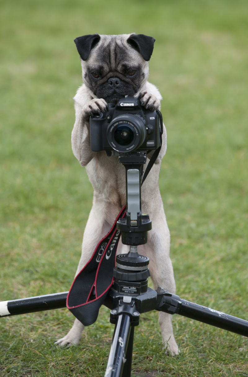 Image result for Dog Photographer
