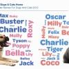 Infographic Dog and Cat Names