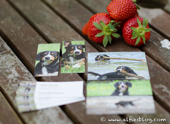 How to make super cute doggie business cards using your own photos getting my very own business cards reheart Gallery