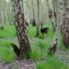 Oh no - The trees in the foreground are in focus, but Alfie is blurry! I have accidentally focused on the trees in the foreground, and the shallow depth of field has pushed Alfie out of focus. A higher f number would have solved the issue! Shot with 1/500 and f4.8