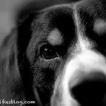 alfie black and white dog pic-2