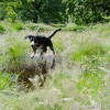 the high shutter speed has frozen Alfie&#039;s action jump in mid air! 1/1250 sec at f4