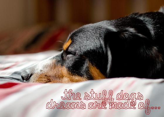 Click the Pic to Find out the stuff little Dogs Dreams are Made of