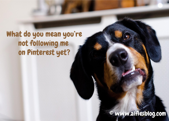 Just looking for my buddies on Pinterest!