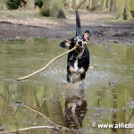 Alfie-dog-Friendly-dog-photo-competition-3357