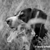 alfie bw in grass-6435