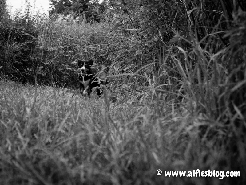 alfie-running black and white-7277