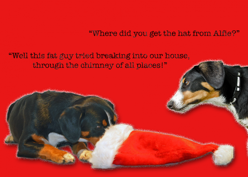 ALFIE-BELLA-WHERE-HAT-XMASCARD