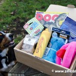 Fings-For-Fido-Review-1036