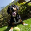 alfie-entlebucher-devon-holiday-3227