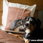 entlebucher-mountain-dog-gifts-pillow-2962