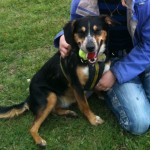 Poppy-entlebucher-rehoming-2