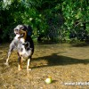 alfie-entlebucher-near-escape-3660