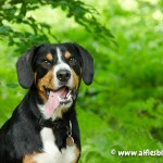 alfie-toy-hill-3486