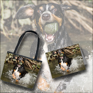 Entlebucher Mountain Dog Gift Shop Fetching Ball in Water