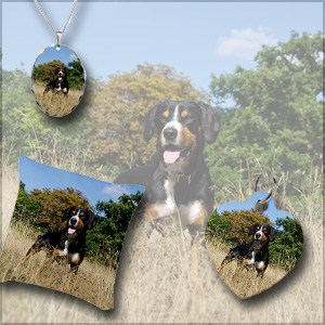 Entlebucher-Mountain-Dog-Shop-kingdom-Gifts-shop-necklace, dog tag, pillow, entlebucher standing in autumnal field