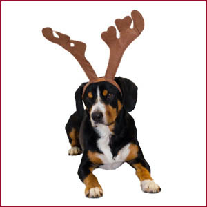 The Barking Reindeer: Entlebucher Mountain Dog in Antlers: Christmas gifts