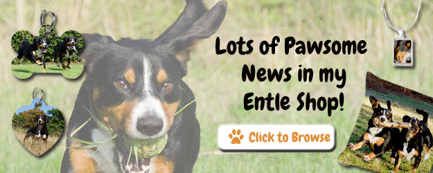 News in the Entlebucher Mountain Dog Shop