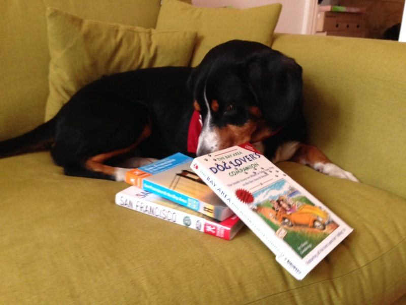 Alfie sniffing out the San Francisco guidebooks