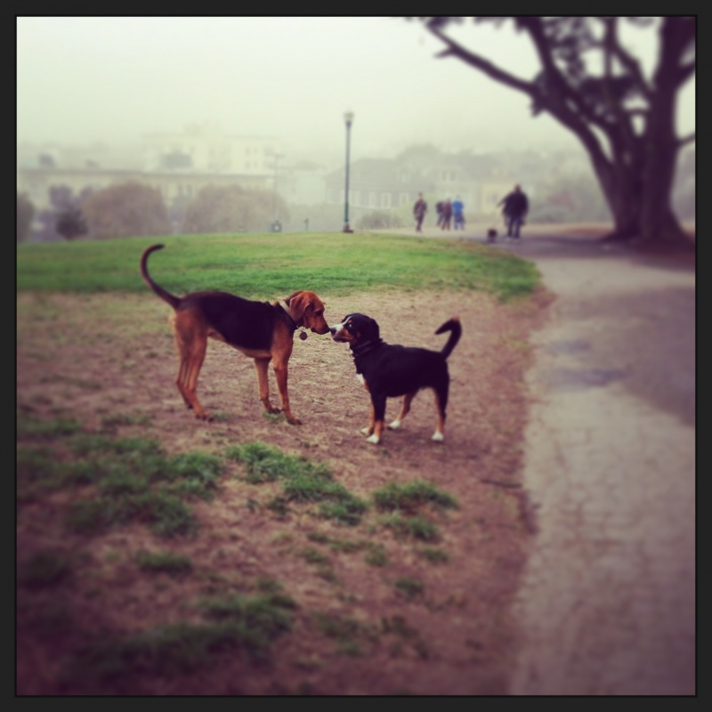 I went to the park yesterday and met my first American doggie friend!