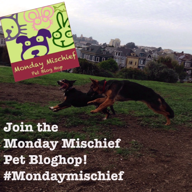 Monday Mischief Pet Bloghop Badge
