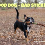 Alfie's Story: Why You should Never Ever Throw Sticks for your Dog