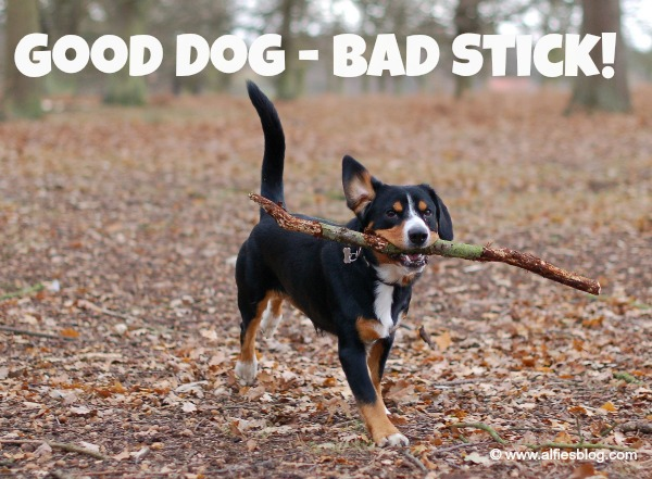 Why sticks are dangerous to dogs