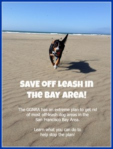 Save Off Leash in San Francisco Bay Area