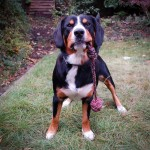 Entlebucher Mountain Dog Resources