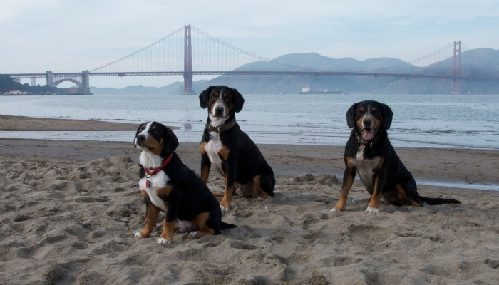 Roman, Jax and Alfie posing on Crissy Field