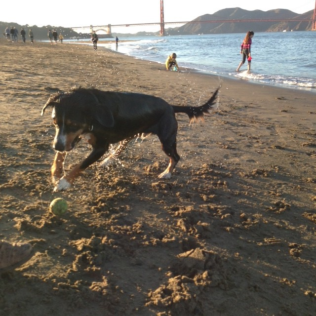 We had time for a game of fetch at Crissy Field