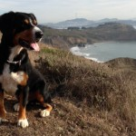 Pawsome Views - Marin Headlands