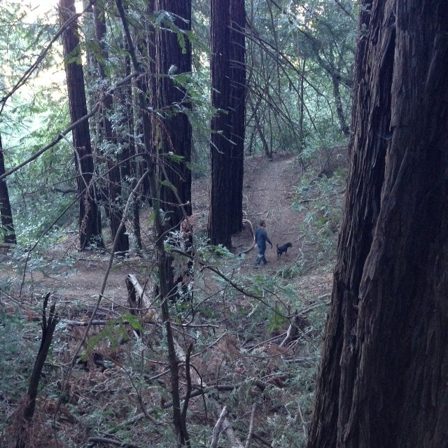 Sniffing out the trails in Redwood Regional Park