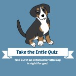 Take the Entlebucher Mountain Dog Quiz