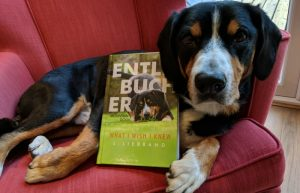 Entlebucher Mountain Dogs – What I Wish I Knew