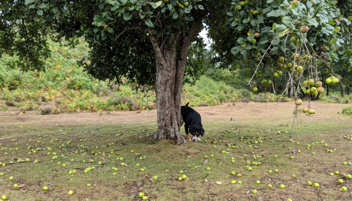 The tennis ball tree that fooled me